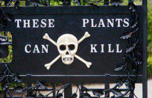 toxic plant